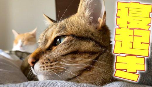 朝起きると目の前が猫だらけになっていました