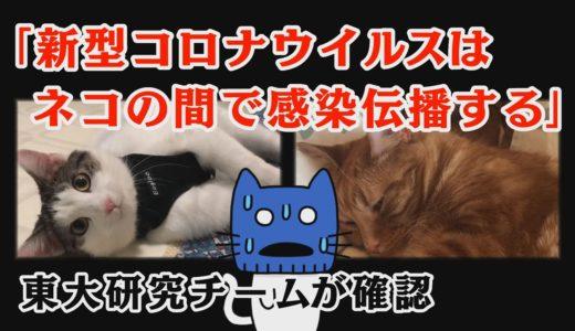 ネコからネコへ感染しやすい新型コロナ、でも無症状?東大研究チームが確認【マスクにゃんニュース】