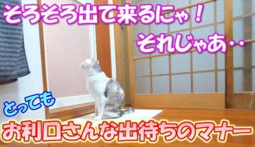 毎晩お風呂の前で出待ちをしてくれる猫のパパへの配慮が素晴らしい!