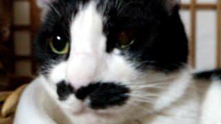 かご猫LIVE 朝まで 200516