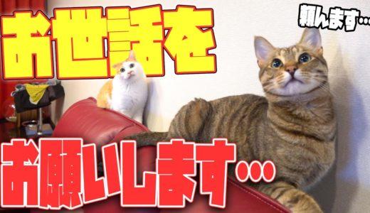 うちの猫たちの世話を皆さんにしてもらえませんか…?