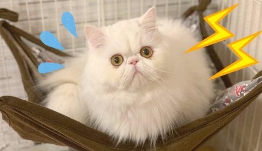 雷が落ちた時の猫たちの反応がおもしろいww