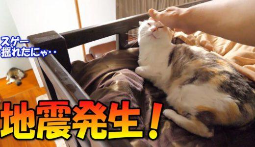 地震発生で飛び起きた猫と部屋を飛び出した猫