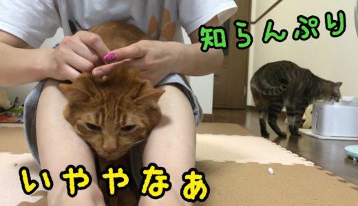 猫2匹まとめて薬漬けにしました。