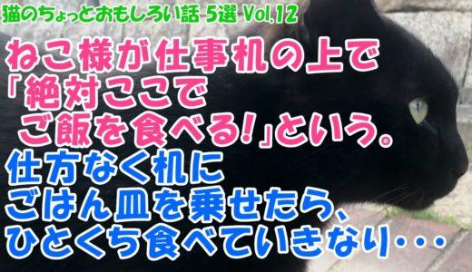 猫のちょっとおもしろい話 5選 Vol.12