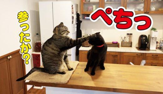 よく見かける猫のケンカとその後