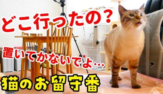 【隠し撮り】留守番中の猫の寂しそうな鳴き声に胸が締め付けられました