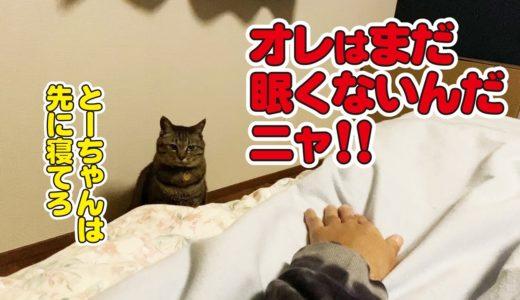 一匹だけどうしても寝たくない猫、いろいろと抵抗する!