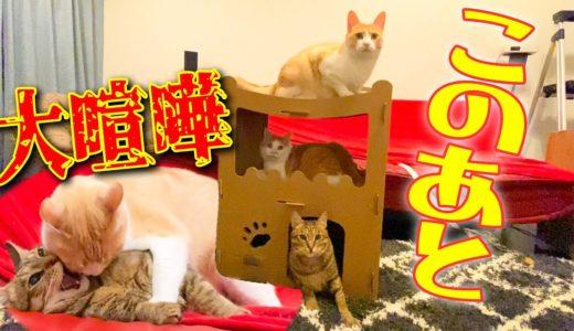 【ガチギレ】猫たちのマンション買っただけなのに大喧嘩になってしまいました…
