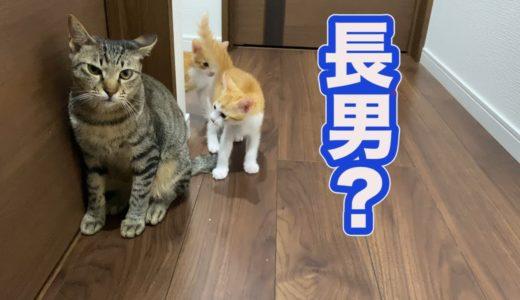 ネネ猫ファミリーが気になる長男炭治郎