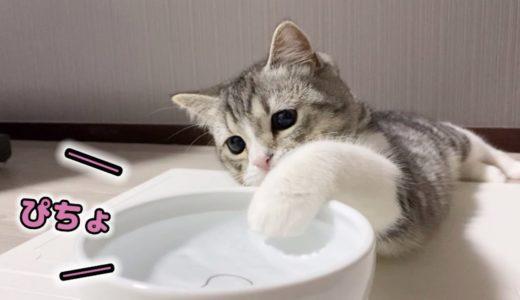 もち猫は水を発見すると我慢できなくてこうなります…笑