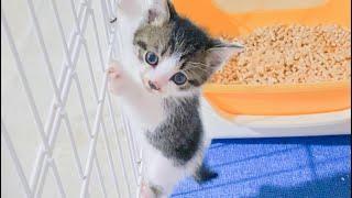 【保護子猫】子猫7頭と、成猫トライアル続々☆【保護猫】