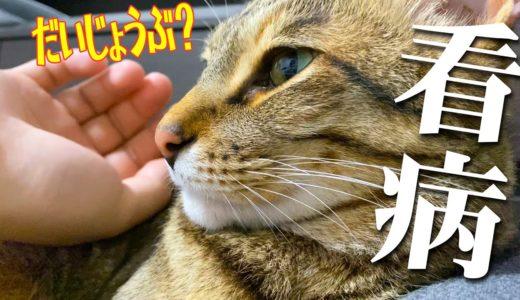 体調不良で倒れた飼い主を看病してくれる猫に涙…