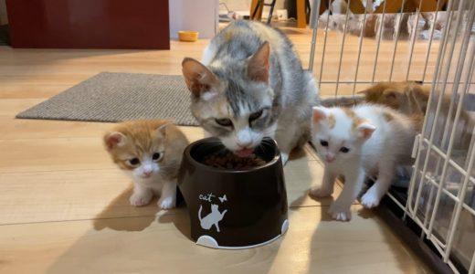 猫の子育て21 赤ニャンのだいぼうけん