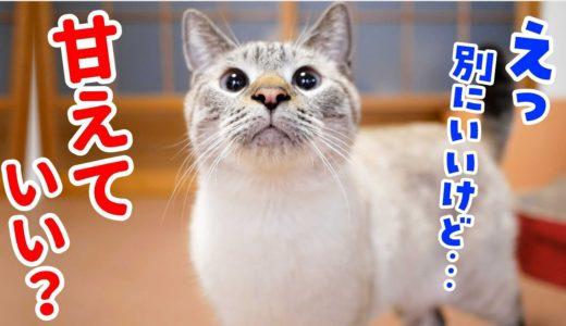 【猫の1日ルーティン】甘えん坊でワガママな猫を飼っている気持ちになっちゃってください