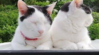 かご猫外LIVE 短時間