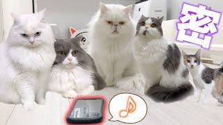 反応率77%「ネコを癒す」専用の音楽が話題!マジでゴロニャーンってなっているゾ!