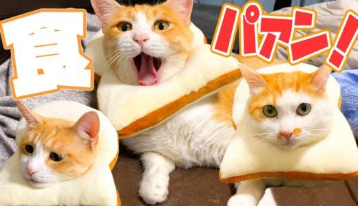 食パンっぽい猫がホントに食パンになってた