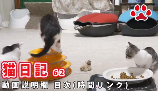 2020-6-2 みゃうの猫日記(説明欄に時間有)  【Miaou みゃう】
