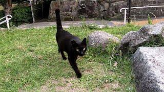 公園の石の上に座っていたら黒猫がトコトコと寄ってきた