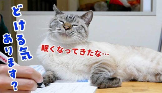 猫のくっつき虫がすごくて勉強が進みません…