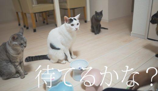 ご飯待ちで見える猫4匹の性格の違い