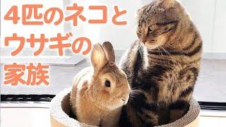 ウサギと猫が一緒に暮らすと…? ゆるくほっこりな大家族の誕生です♡