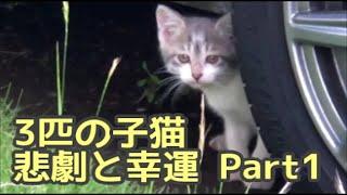【子猫保護】母猫が3匹の子猫を連れて来た・悲劇と幸運の1週間 Part1