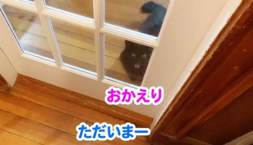 【しゃべる猫】飼い主の帰宅に興奮を隠せず意外な発言をしてしまった猫【しおちゃん】