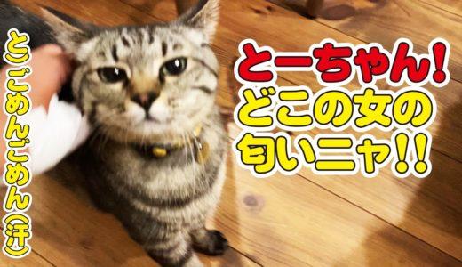 久しぶりに実家の猫に会いに行って帰ってきたら…