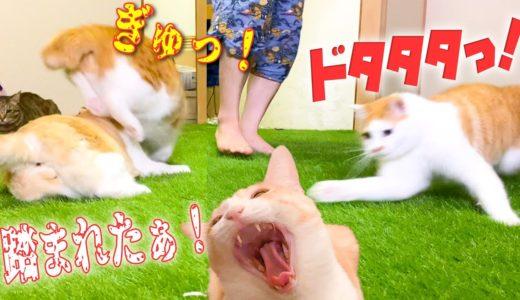 走る子猫に容赦なく踏まれる親猫