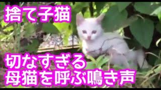 【子猫保護】切なすぎ注意!母猫の鳴き声アプリに懸命に応える捨て子猫