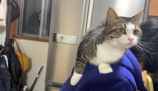 飼い主を踏み台にして堂々と登る猫
