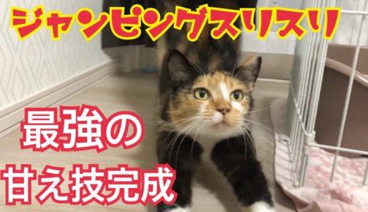 最強の甘え技ジャンピングスリスリを取得した猫がかわいい!【保護4日目】