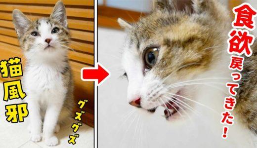 猫風邪をぶり返して丸一日何も食べてくれない子猫。翌日から徐々に食欲が戻ってきました