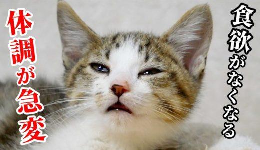子猫が我が家にきて3日目。子猫の体調が悪化してしまいました
