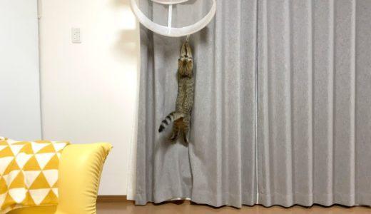 これは猫が干されてる動画ではありません