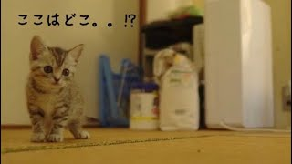 生後もうすぐ2ヶ月の子猫がはじめてねこもふ家に来ました♡