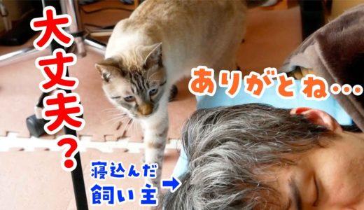 飼い主が体調不良で寝込んでいたら猫が心配してお見舞いに来てくれました
