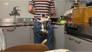 猫って飛ぶんですね。