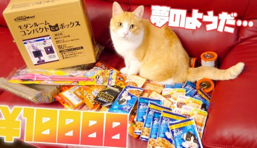 【猫発狂】ドンキホーテで1万円分猫用品買ったら猫たちが超喜んだwww