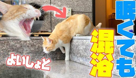 眠くても飼い主と一緒にお風呂に入る猫