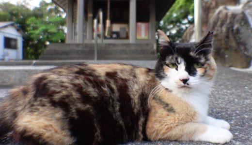 神社にいた三毛猫をナデナデしたら喜んで膝の上に乗ってきた