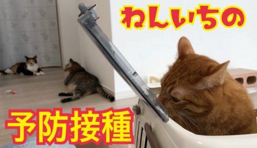 年に一回の注射に行ってきた猫とお出迎え猫がかわいい!