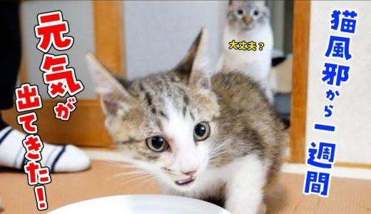 【子猫10日目】猫風邪で不調だった子猫。ご飯をモリモリ食べて元気が戻ってきました!