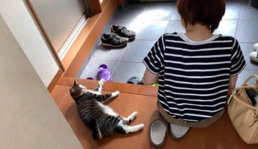 高いところだったら危なかった猫