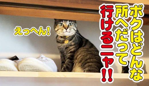 いろんな所を器用に開けてしまう猫!