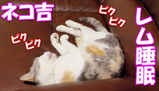 レム睡眠中で全身が激しくピクピク動くネコ吉