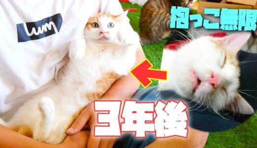 子猫時代のように猫は大人になっても抱っこさせてくれるの?