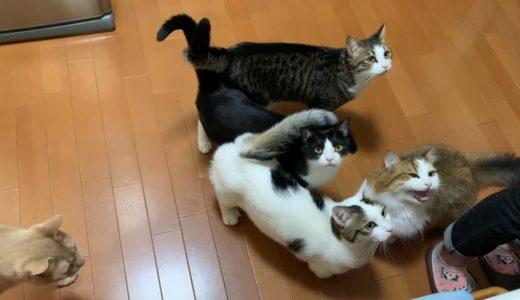 誰かがおねだりすると集まってくる猫